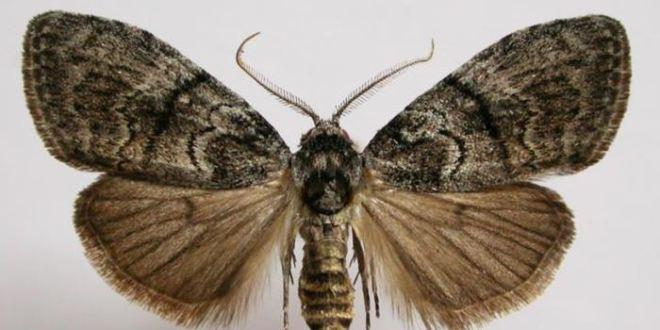 Darwin avait encore raison : De grandes antennes sont importantes dans la sélection sexuelle