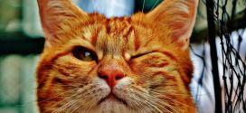 Qui a domestiqué les chats ? Remerciez l'Égypte antique