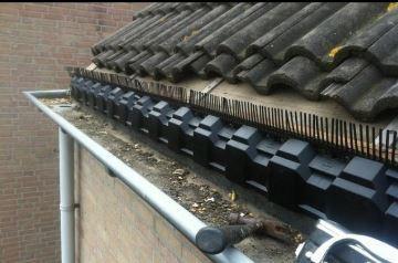 Vogelwering plaatsen in dakgoot  Werkspot