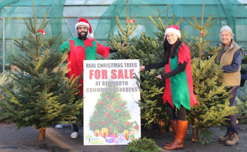 Christmas Trees for Sale: From €80 per Metre