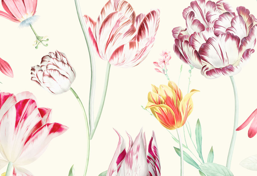 Tulipina Flowers Wall mural closeup