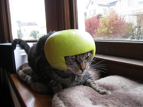貓貓的水果帽   貓咪   生活發現   妞新聞 niusnews