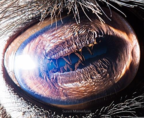你敢直視牠們的眼睛嗎?與動物零距離大眼瞪小眼攝影集   眼睛,Suren Manvelyan,超微距,攝影,攝影集   妞 ...