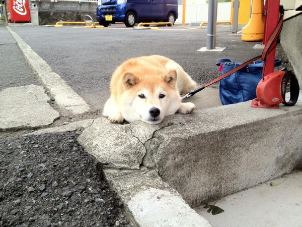 我會慢慢等等電動門的鈴聲~ 你在血拼時狗狗都是這副模樣…… | 狗、等待、主人、購物、血拚 | 生活發現 ...
