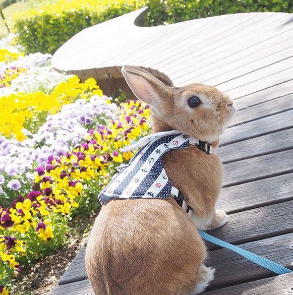 根本是草地小精靈!軟萌兔兔兄妹的生活日記   日本、兔子、可愛、萌、usagraph   生活發現   妞新聞 niusnews