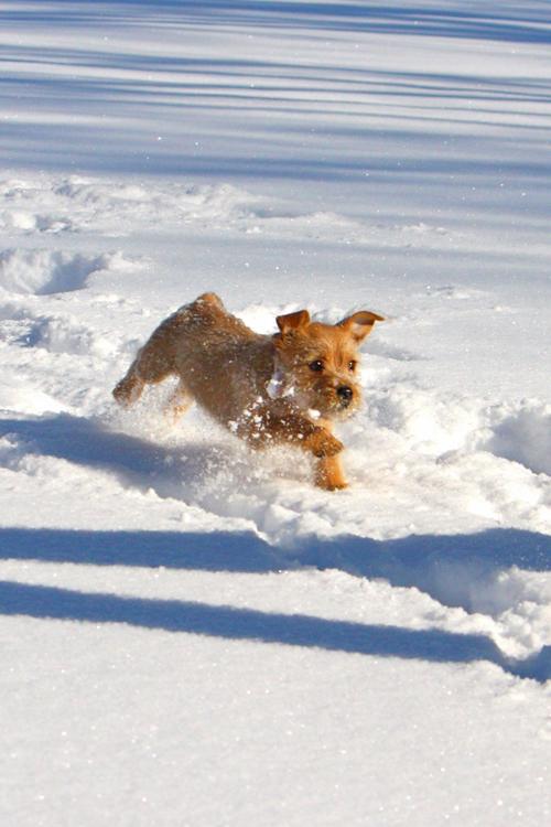 滿身是雪!玩雪的狗狗特輯   雪,冬天,玩雪,狗狗,萌   生活發現   妞新聞 niusnews