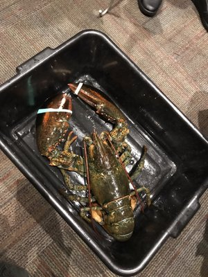 Fishman Lobster Clubhouse Restaurant Opening Times in Toronto, ON