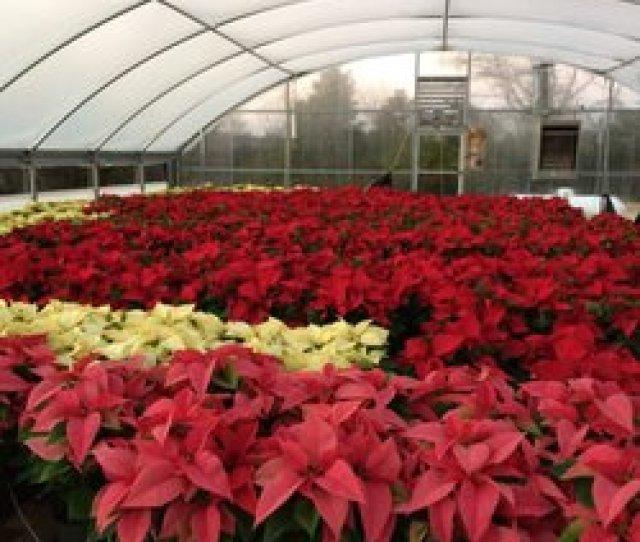 Hickory Creek Farm  Reviews Farms Christmas Trees