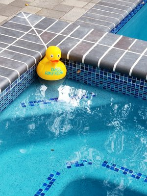 national pool tile group 4980 e landon