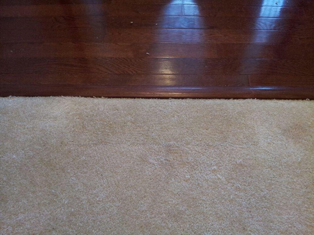 After bleach spot on carpet repair