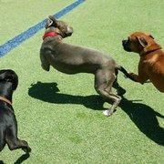 Smart Dog Dallas  104 Photos  63 Reviews  Pet Training  326 Rock Island St Dallas TX