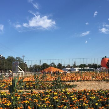 Uesugi Farms Pumpkin Park  418 Photos  220 Reviews