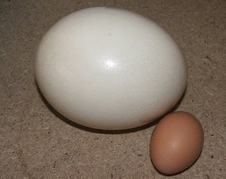 Pike Place Market Creamery - Seattle, WA, United States. Ostrich egg compared to chicken egg