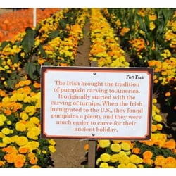 Uesugi Farms Pumpkin Patch  San Martin CA  Yelp