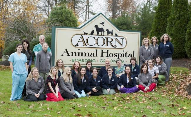 Acorn Animal Hospital 11 Photos Veterinarians 20 Earl S Way Franklin Ma United States