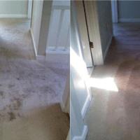 Impeccable Carpet Cleaning - Limpieza de alfombras - 2752 ...