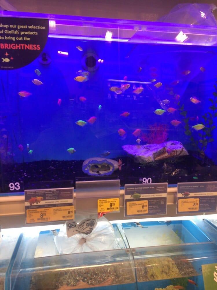 glo fish yelp