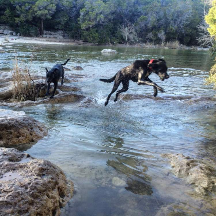 Dogs Hiking in Austin