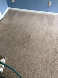 Photos for Deep Clean Carpet and Upholstery Care - Yelp