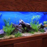 Infinity Aquarium Design