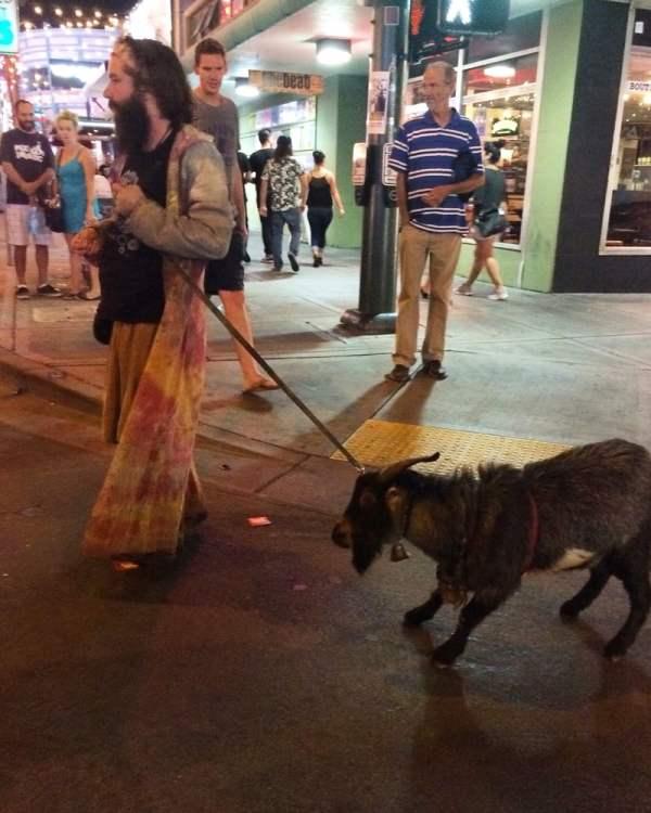 Walking a Goat Hippie