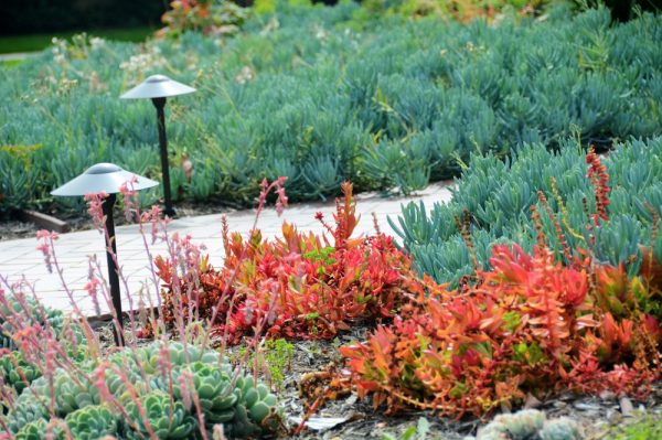 colorful drought tolerant plants