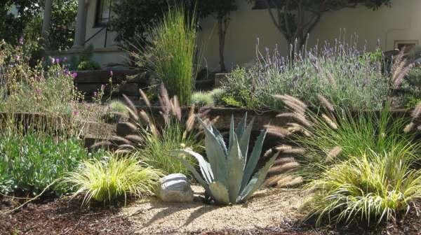 drought tolerant plants desert