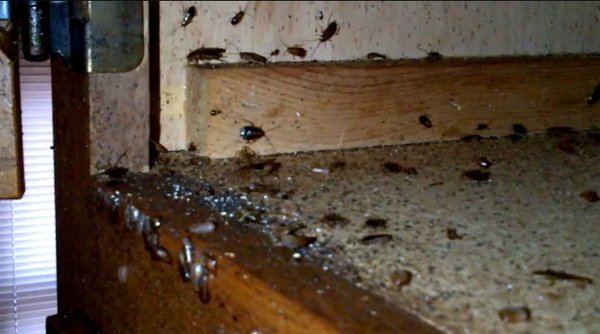Photo Of Cal Park Apartments Bakersfield Ca United States Roach Infestation