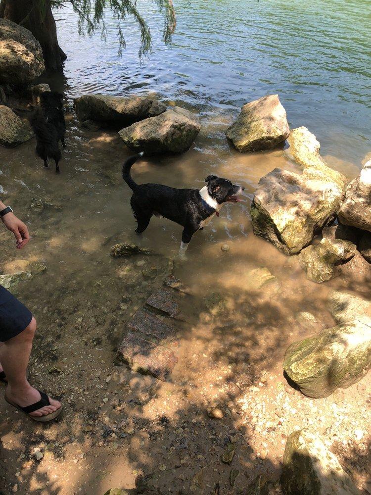 Dogs Enjoying a swim in austin's hiking trails