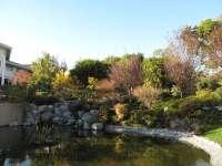 Japanese Garden & Koi Pond - Yelp
