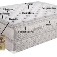 Carpet Pro Care - CLOSED - Carpeting - Sterling, VA ...