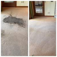 Who do you trust with your carpets? - Yelp