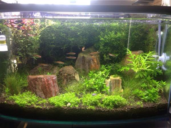 garden in fish tank - yelp