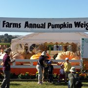 Uesugi Farms Pumpkin Park  296 Photos  168 Reviews