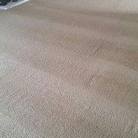 Carpet Medic - 18 Photos & 27 Reviews - Carpet Cleaning ...