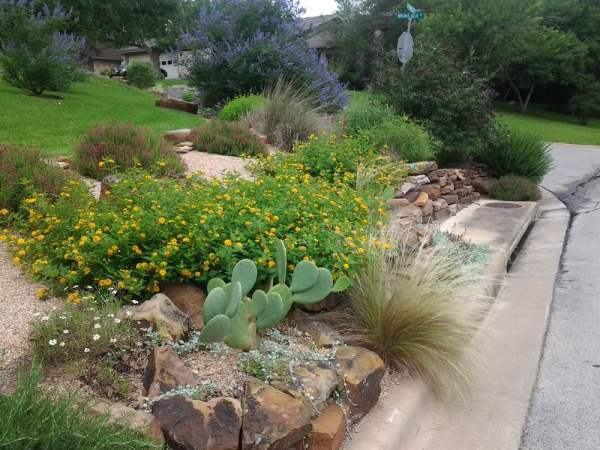 xeriscape design. butterfly