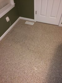 Photos for Prosteam Carpet Care - Yelp