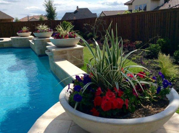 flaxlillies and petunias planted