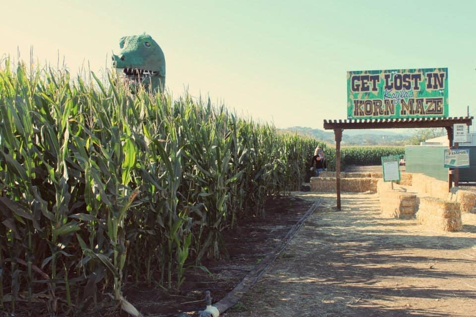 Uesugi Farms Pumpkin