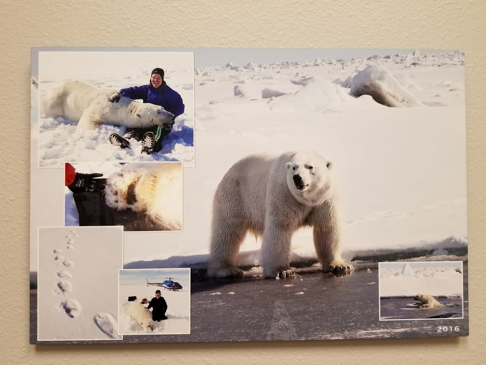 Dr. Wilson helping fish and game care for polar bears. - Yelp