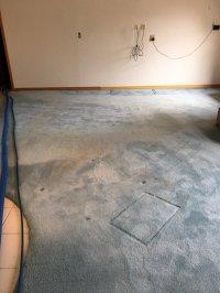 Photos for Sam Miller's Carpet Care