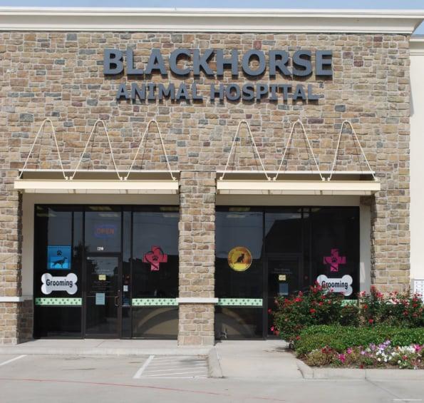 Photos For Blackhorse Animal Hospital  Yelp