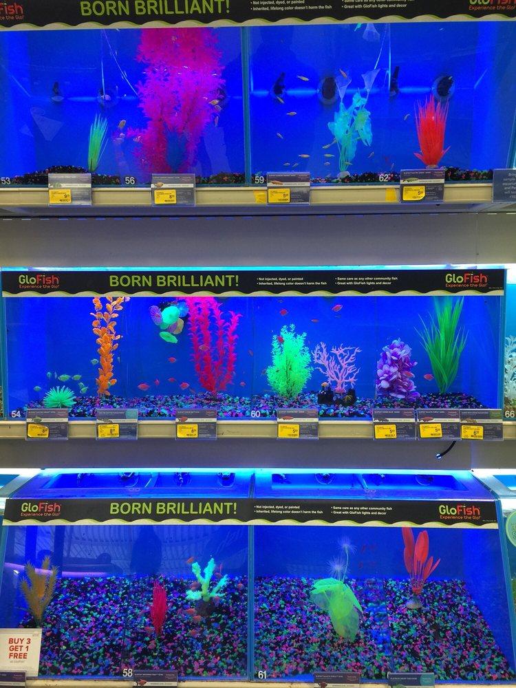 glofish at petsmart in