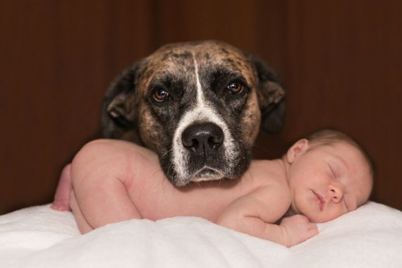 Bringing Home Baby Tips For Adjusting Your Dog To Your New Family Member Dogtopia