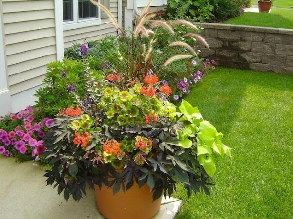 container gardening tips - bob