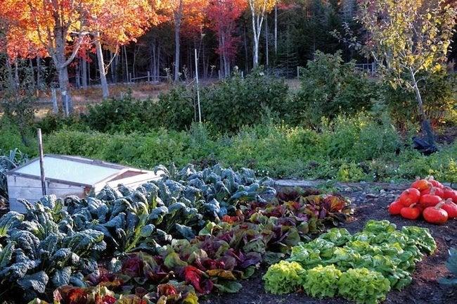Fall Vegetable Garden Bob Vila
