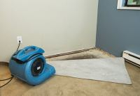 How to Get Mold Out of Carpet