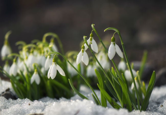 8 winter flowers to