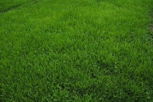 Grass Alternatives  Keep Off the Grass  Bob Vila