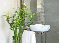 Lucky Bamboo - Bathroom Plants - 10 All-Time Favorites ...
